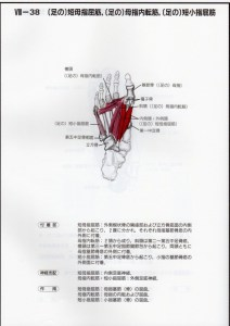 短母指屈筋、母指内転筋、短小指屈筋