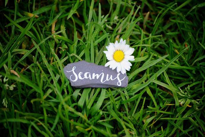 Seamus-pebble-resized