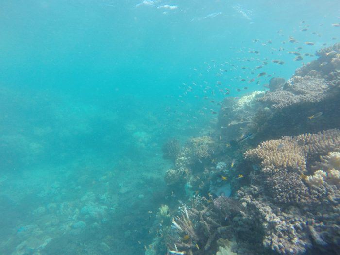 healthy Great Barrier Reef snorkeling tours