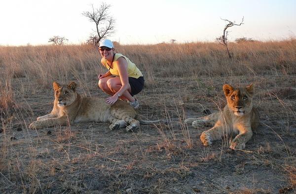 Zimbabwe lions