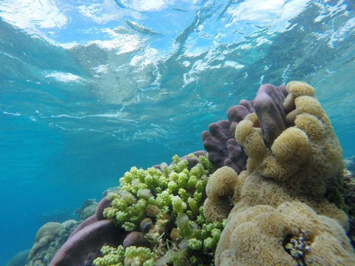 PNG underwater