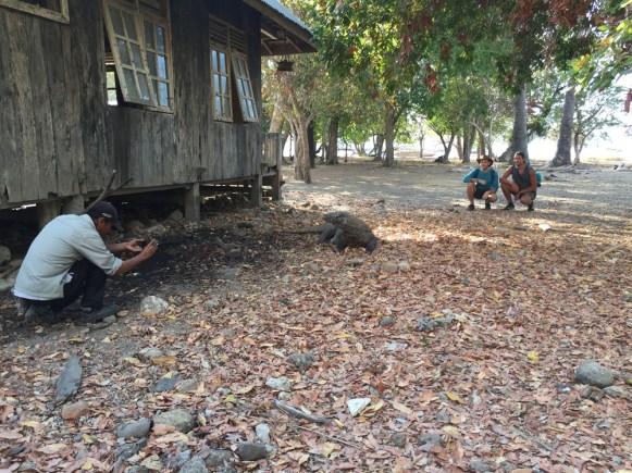 Komodo Island review