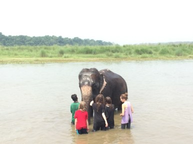Elephant bathing Chitwan