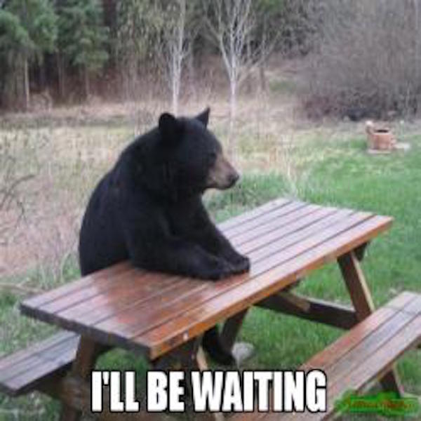 Waiting Bear