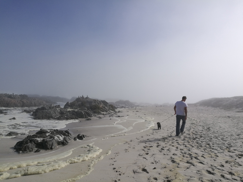 yzerfontein-dog-walk