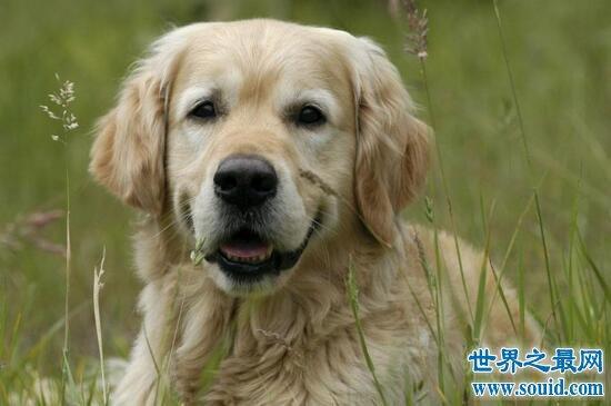 【圖】狗為什么不能吃巧克力,吃一點就會中毒而死_世界之最網