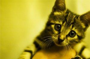 Kedi yavrusu=pussy=amcık