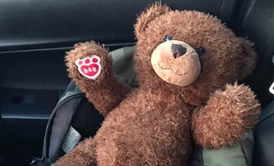 the teddy bear has