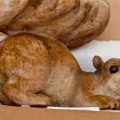 A Squirrel in a Box That Came in the Mail
