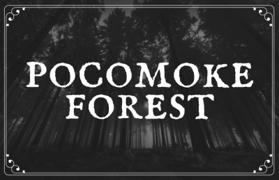 Pocomoke Forest A