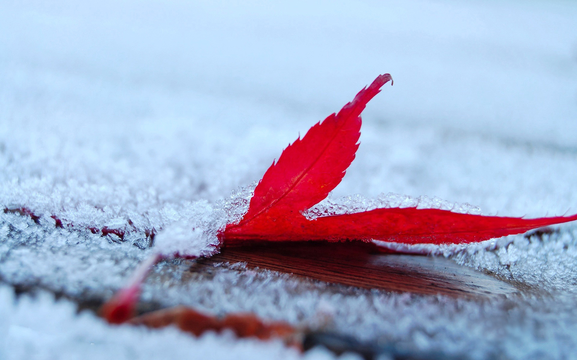 Falling Snow Wallpaper For Ipad Fall Wallpaper Free Free Wallpaper World