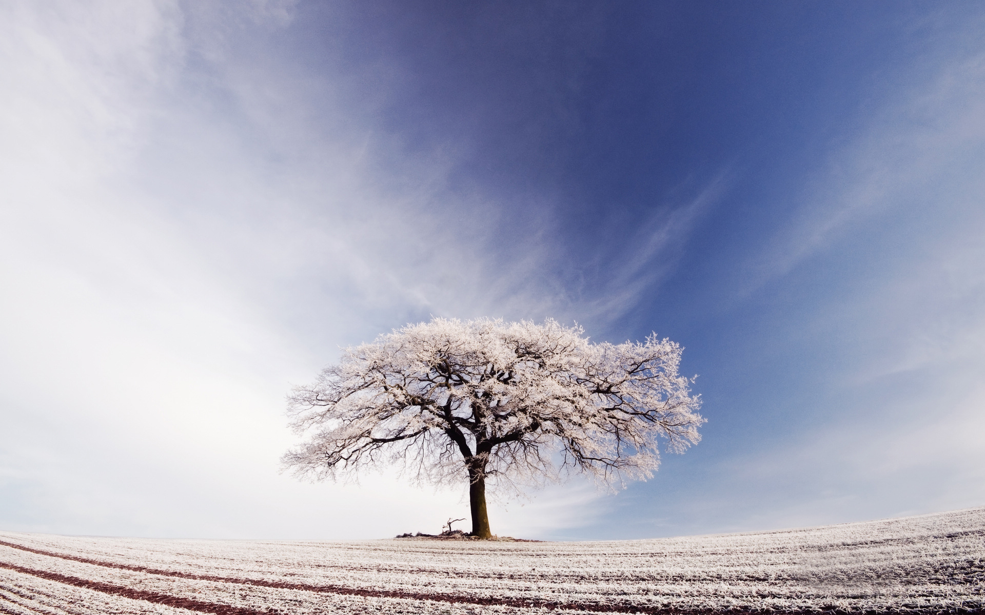 Falling Snow Wallpaper For Ipad Tree Standing Alone In The Snowy World Its Branches All