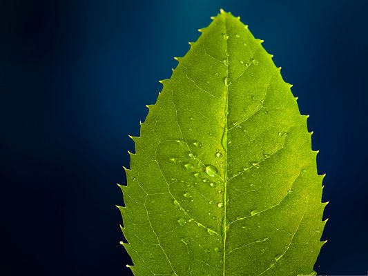 Cute Baby With Rain Wallpapers High Resolution Wallpapers A Green Leaf On Blue