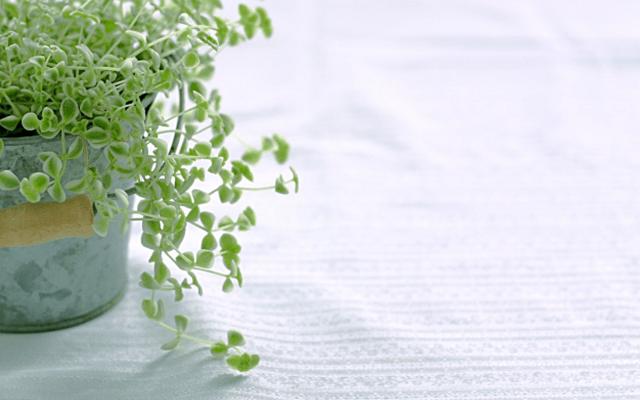 観葉植物運気