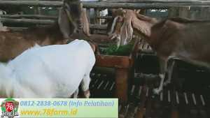 Workshop Ternak Kambing Yogya