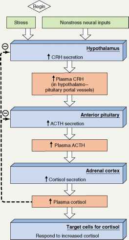 Control Systems Involving The Hypothalamus And Pituitary
