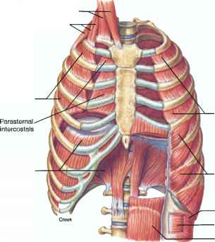 the lung anatomy diagram label kohler engine wiring harness inspiration and expiration - human physiology