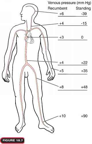 How To Take Manual Blood Pressure On Lower Leg