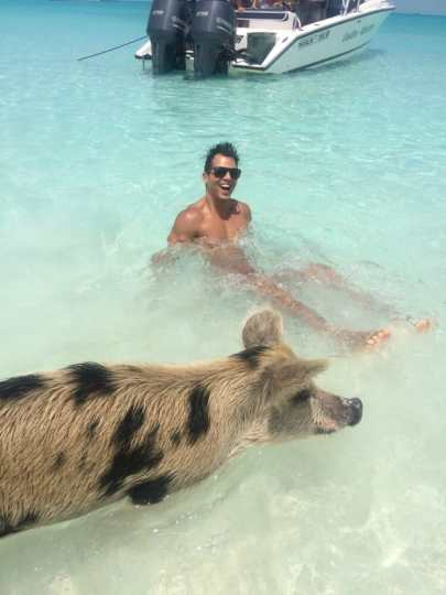Swimming with pigs and sharks in the Bahamas how to get to Pig Beach