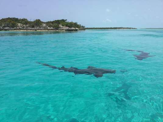 Staniel Cay, Bahamas.
