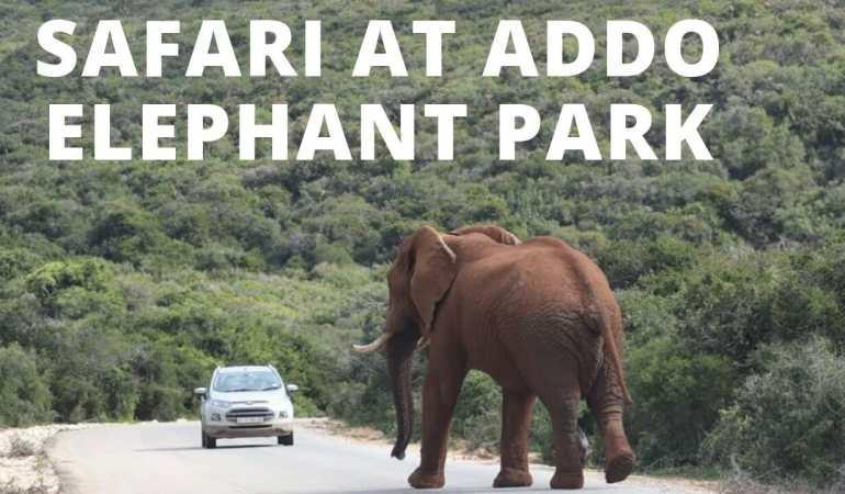 Safari at Addo Elephant Park – Video
