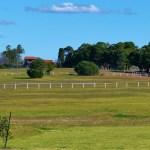 Horse-free paddocks
