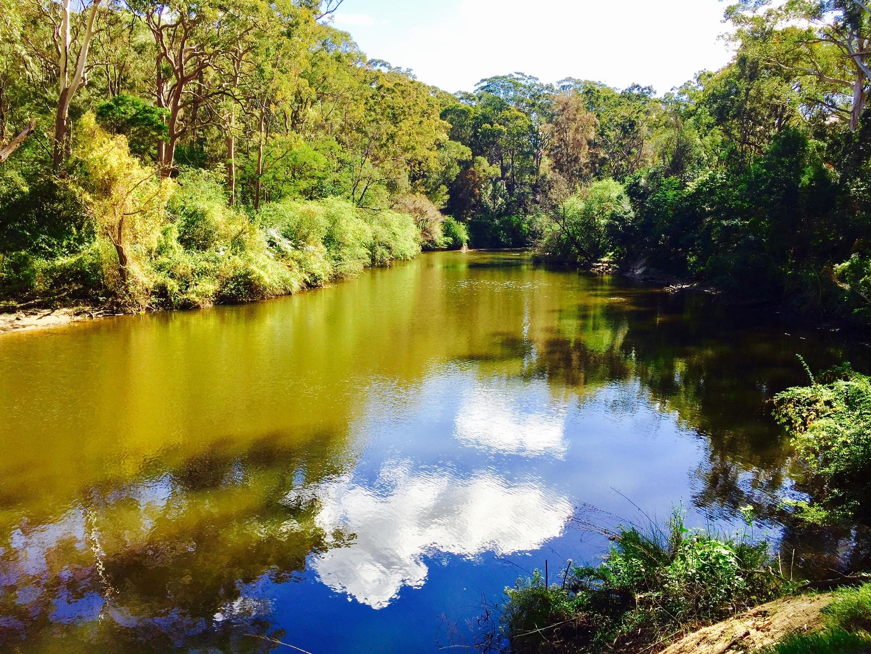 Lane Cove River View From The Wharf Site
