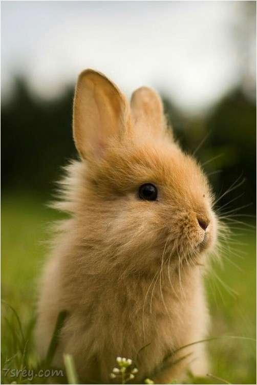 Rabbit Wallpaper Iphone صور ارانب جميلة احلي صور ارانب كيوت خلفيات ارانب رائعة