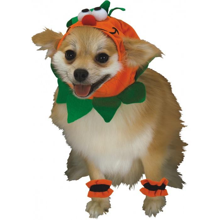 Pumpkin Dog pumpkin dog costume
