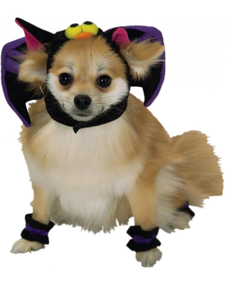 Terrier Wigs Russell Jack