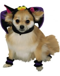 Bat Dog bat dog costume