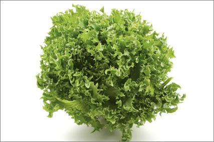 Grøn krølsalat