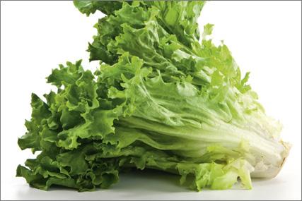 Pluksalat grøn (Egeblad)