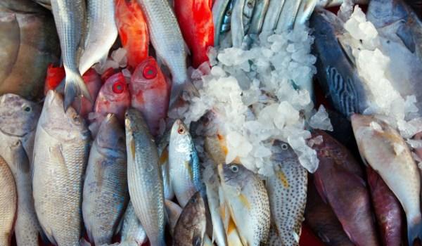 Expertos aclaran que sí se puede consumir y comercializar pescado y crustáceos pese a marea roja
