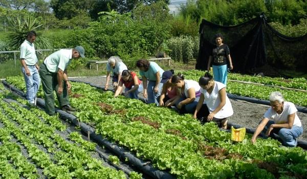 Región Brunca cuenta ya con 420 productores de agricultura orgánica