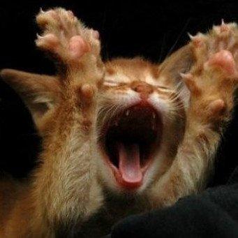 Как отучить кошку орать