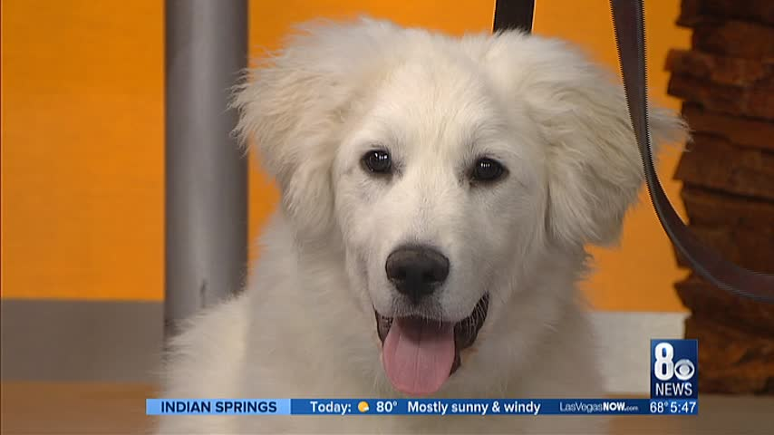 "Animal Foundation to put on ""Best in Show"""