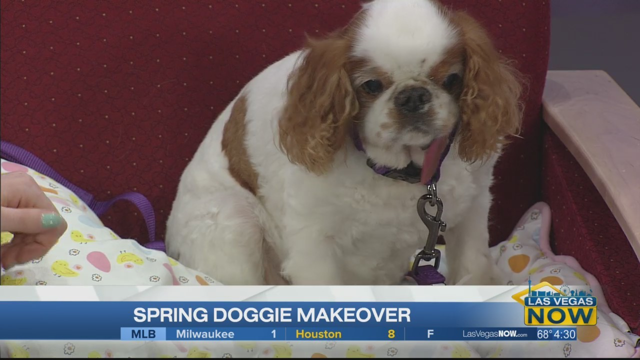 Spring doggie makeover