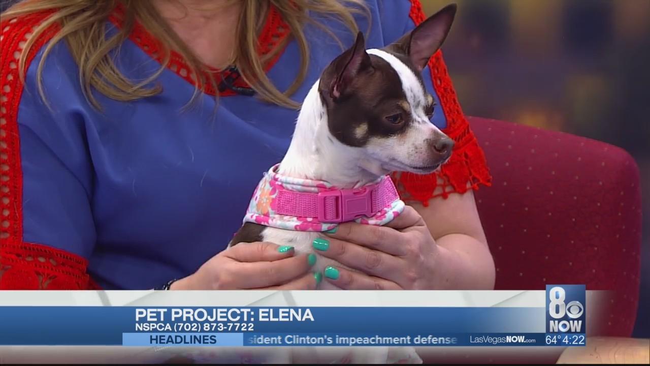 Elena the dog needs a forever home