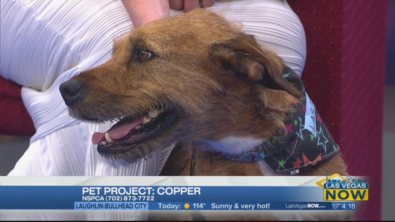 Copper the dog needs a home