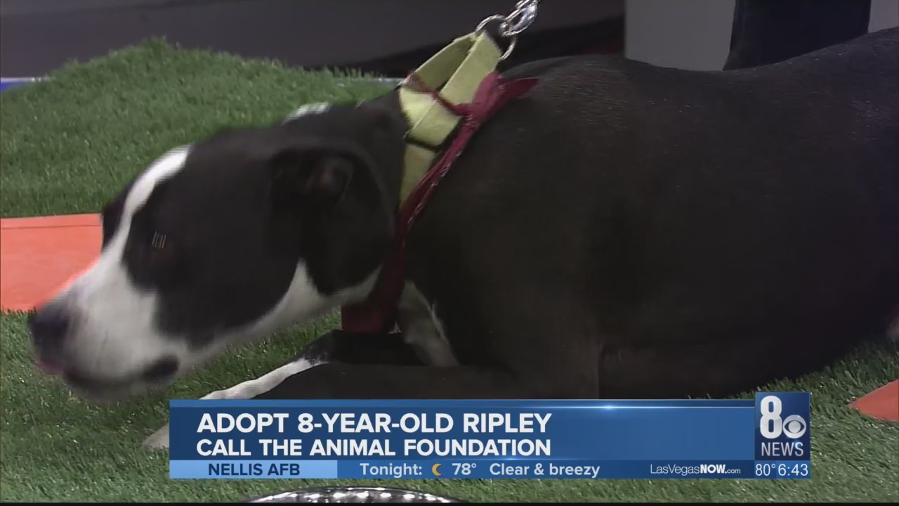 Ripley makes this week's Puppy Picks