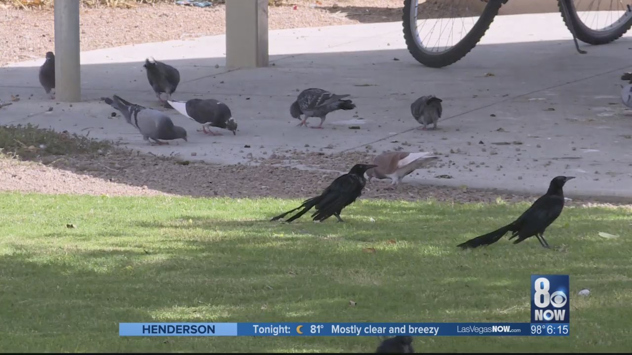 Proposed_ordinance_wants_to_ban_pigeon_f_0_20180831032405