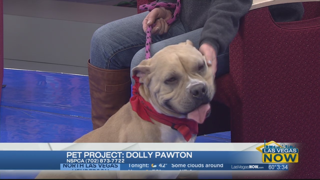 Dolly Pawton is looking for a forever home