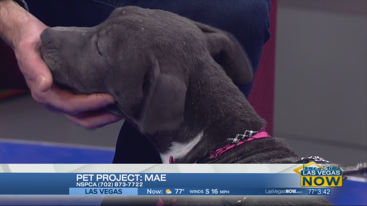 Mae the puppy needs a forever home