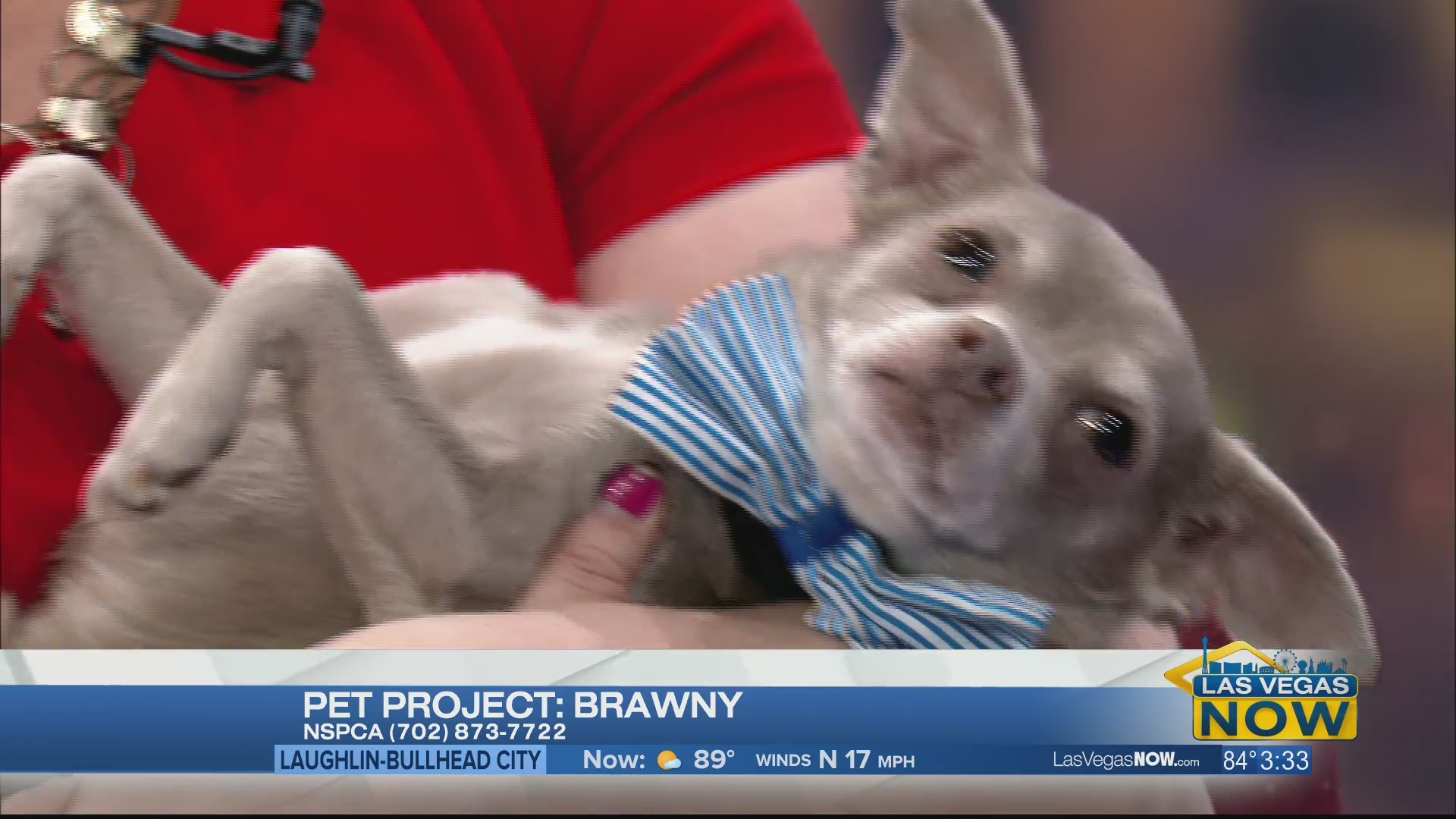 Brawny the dog is looking for a forever home