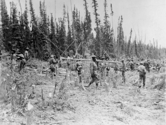 Black soldiers working with handtools clearing path for Alaska Highway. 1942