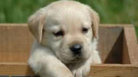 Da lunedì ufficialmente in servizio l'anagrafe canina alla zona Ardizzone
