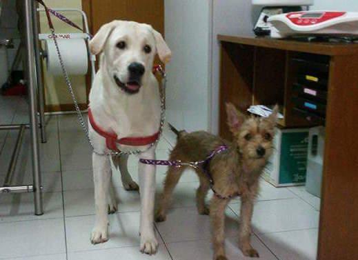Abbandonati davanti allo studio veterinario: chi vuole adottarli?