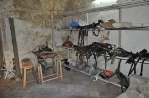 foto 3 cavallo