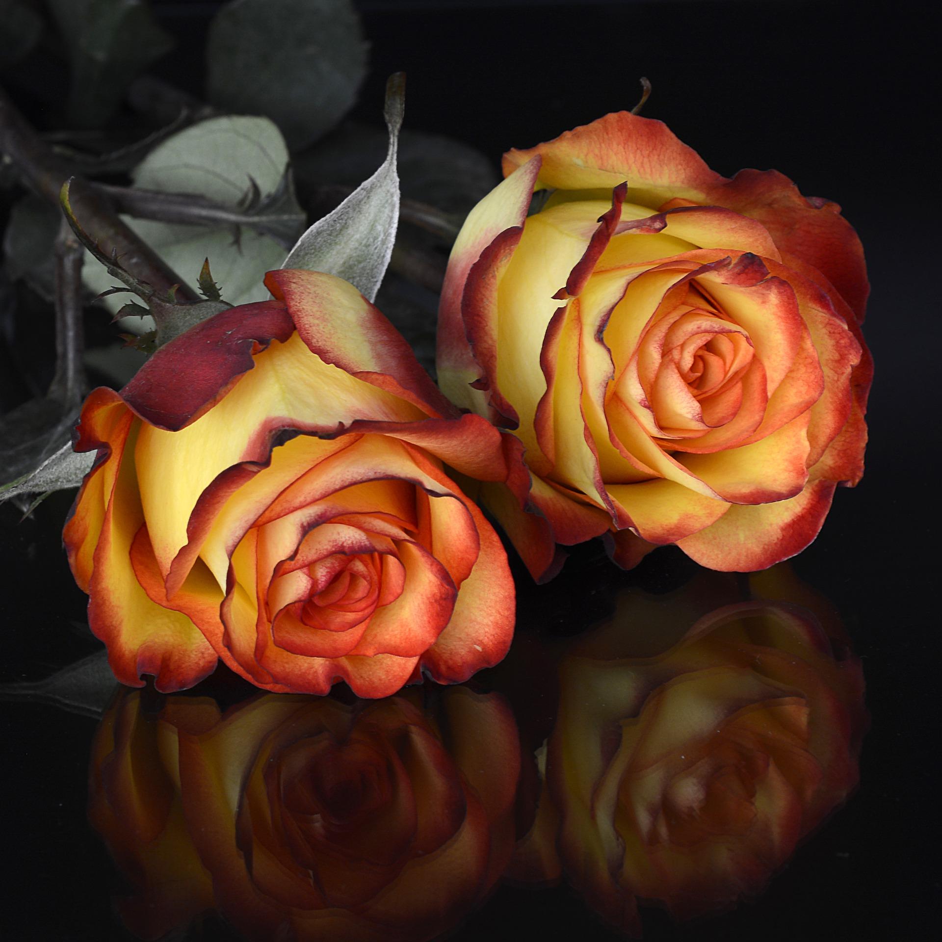 rose3063282_1920  989 XFM